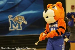 U of M Tiger